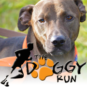 The Doggy Run is Giving 3 Entries Away!